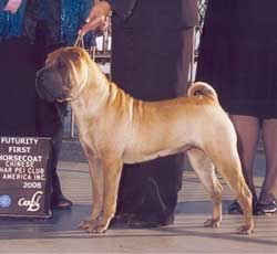 breed standard brekkukots chinese shar pei. Black Bedroom Furniture Sets. Home Design Ideas